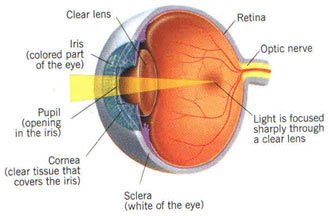 Development of Cataract